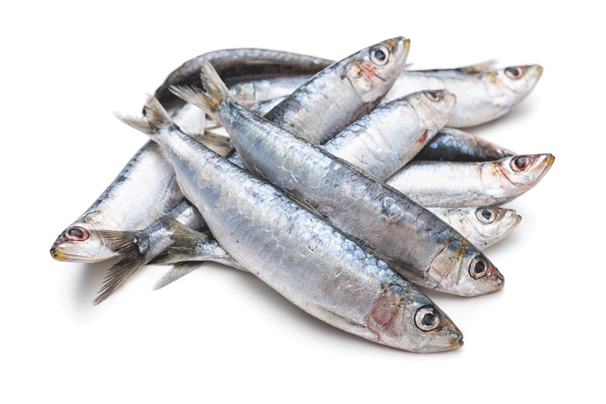 Casseruola di sardine e patate