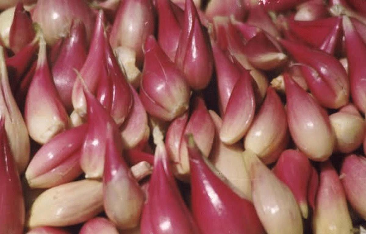 Gamberetti in insalata con salsa di scalogno